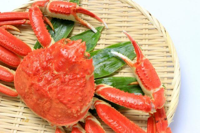 鳥取県で食べられる蟹の種類 紅ズワイガニ