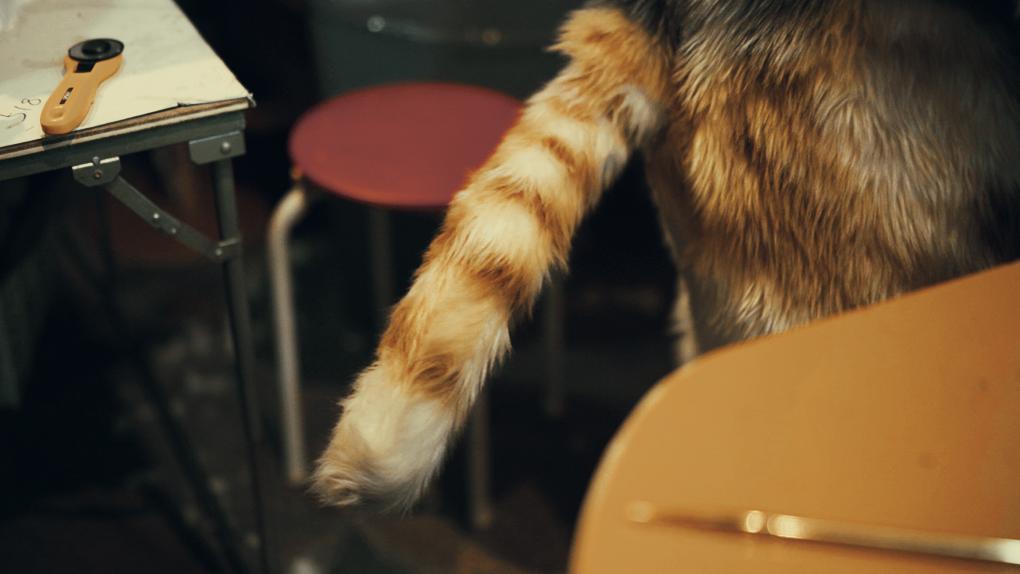 猫スーツのしっぽ