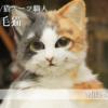 【鳥取×働く人 vol.37】焼き芋屋/猫スーツ職人「山田三毛猫」さんにインタビュー